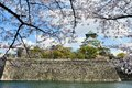 Osaka castle with the cherry blossoms in spring Royalty Free Stock Photos