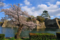 Osaka castle with the cherry blossoms in spring Royalty Free Stock Images