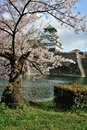 Osaka castle with the cherry blossoms in spring Stock Image