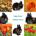 Ostern-Collage Stockfoto
