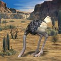 Ostrich-3D Animal Royalty Free Stock Image