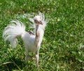 Ostrich baby on green grass background Stock Photo
