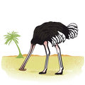 Ostrich with head in sand side view of white background copy space Stock Image