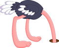 Ostrich hiding its head