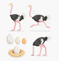 Ostrich and ostrich eggs on the nests. Vector illustration. Royalty Free Stock Photo