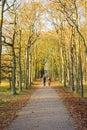 Otoño en el bosque Fotos de archivo libres de regalías