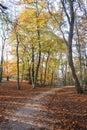 Otoño en el bosque Fotos de archivo