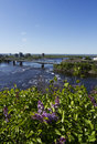 Ottawa river and lilac flowers view from parliament hill in ontario canada with alexandra bridge Stock Images