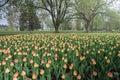 2016 Ottawa Tulip Festival  at Dow's Lake Royalty Free Stock Photo