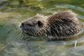 Title: Otter