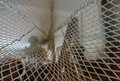 Otter net tunnel.