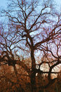 oude boomschaduw Royalty-vrije Stock Foto's