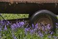 Oude landbouwbedrijfmachines in trillend klokjebos Royalty-vrije Stock Fotografie