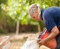 Oude vrouw het oogsten pruimen Stock Foto's