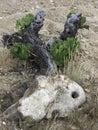 Oude wijnstokreeks Stock Foto