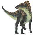 Ouranosaurus herbivore dinosaur was a herbivorous hadrosaur that lived during the cretaceous period of africa Stock Image