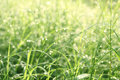 Out of focus drop water on grass in morning Stock Image