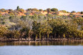 Outback Ocean Mangroves, near Redbanks at the top of Spencer Gul Royalty Free Stock Image