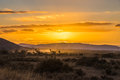 Outback Sunset 2 Royalty Free Stock Photo