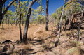 Outback undara volcanic national park australia desolated walking track in the australian Royalty Free Stock Image