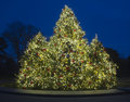 Outdoor Christmas Tree Stock Photography