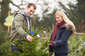 Outdoor couple choosing christmas tree together looking happy Stock Images