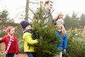 Outdoor family choosing christmas tree together having fun Royalty Free Stock Images