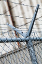 Outdoor fence detail of sharp barbwire installation security and protection concept Royalty Free Stock Image
