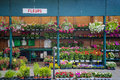 Outdoor flower shop in paris france Royalty Free Stock Images