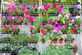 Outdoor flowers at farmers street market fresh nature backgrounds Royalty Free Stock Photos