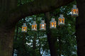 Outdoor party night illumination in the park the place illuminated with lights luminaries hanging on a big tree branch Stock Image