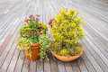 Outdoor plant in a traditional wooden floor Royalty Free Stock Photos