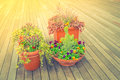 Outdoor plant in a traditional wooden floor filtered image p processed vintage effect Royalty Free Stock Photo