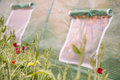 Outdoors closeup of windows of little greenhouse for gently vent Royalty Free Stock Photo