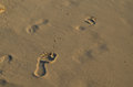 Outline of Footprints in the Sand of a Beach Royalty Free Stock Photo