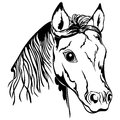 Outline of horse head black and white Stock Photography