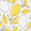 Outline seamless pattern with hand drawn lemon and leaves doodle fruit for package or kitchen design contoured background drinks Stock Image