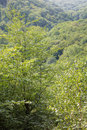 Outlook over little carpathian forest slovakia Royalty Free Stock Photography
