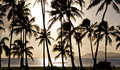 Outrigger canoe paddling in front of palm trees Stock Photo
