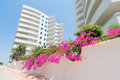Outside the my marine residence alanya jul with beautiful pink flowers on june in alanya turkye housing complex consists of Stock Photos