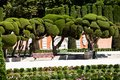 Outstanding cypress trees in retiro park in madrid spain Royalty Free Stock Photos