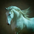 Outstanding lusitano stallion portrait in soft lights an Royalty Free Stock Photo