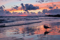 Outstanding seascape sunset right after view with sea gull in foreground with reflection while stormy weather on baltic sea Royalty Free Stock Images