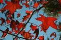 Outumn Leaves - Campos do Jordao Royalty Free Stock Photo