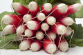 Oval red and white radish on backgrpound Stock Photo