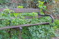 Overgrown forest bench Royalty Free Stock Photo
