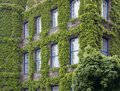 Overgrown house facade in duesseldorf the capital city of a german state named north rhine westphalia Stock Photo