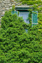 Overgrown ivy green covering old dilapidated window Royalty Free Stock Images