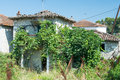 Overgrown old derelict house with vines and figs Royalty Free Stock Image