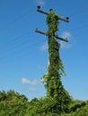 Overgrown telephone pole Royalty Free Stock Photo